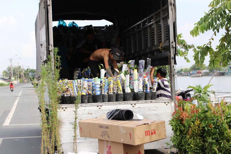 Hình Ảnh Hoạt Động Chuyển Cây Lên Xe Chuẩn Bị Giao Hàng Cty TNHH Cây Xanh Đông Thuận Đông